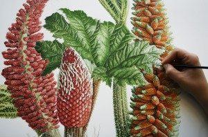 chilean rhubarb