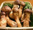 16 Delicious Matsutake Mushroom Health Benefits