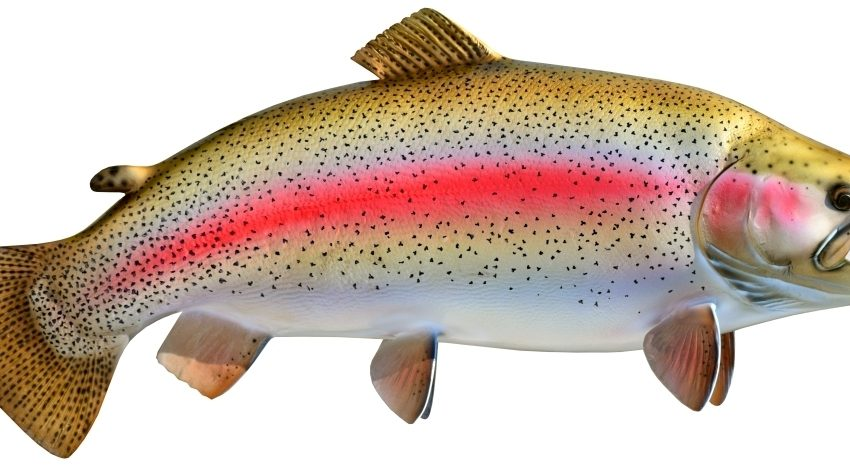 12 Health Benefits of Rainbow Trout for Brain Development