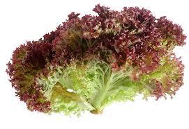 10 Health Benefits of Lollo Rosso (Red Coral Lettuce)
