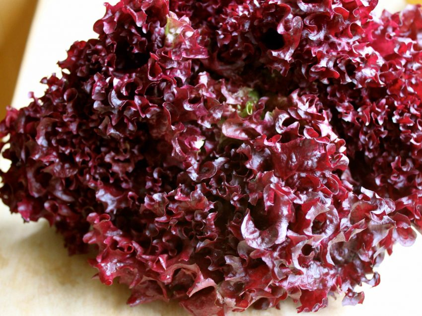 18 Unknown Red Lettuce Health Benefits #High Nutrition