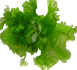 13 Unexpected Health Benefits of Sea Lettuce for Body