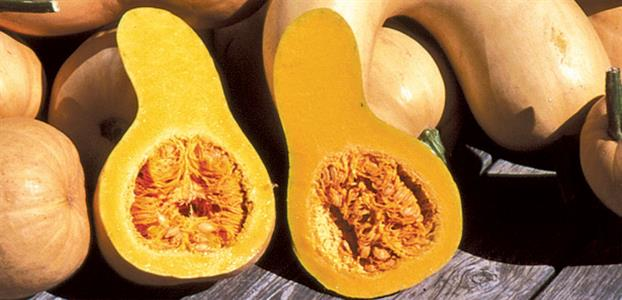 17 Incredible Health Benefits of Crookneck Pumpkin