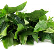 20 Science-Based Health Benefits Sweet Yam Leaves