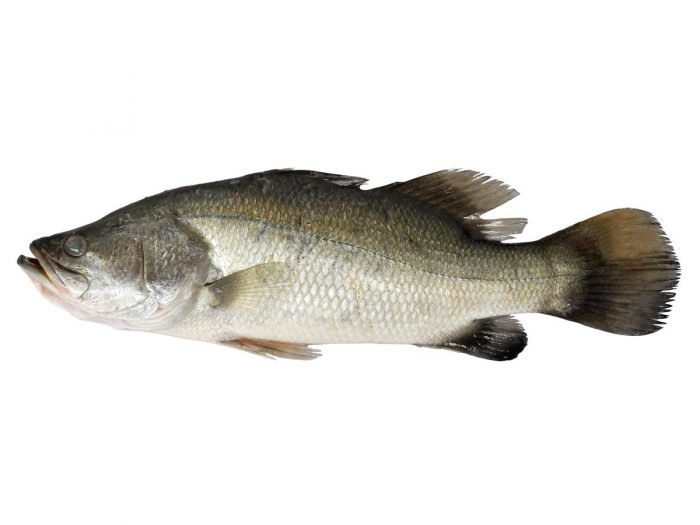5 Health Benefits of Barramundi Fish That You Might Never Know