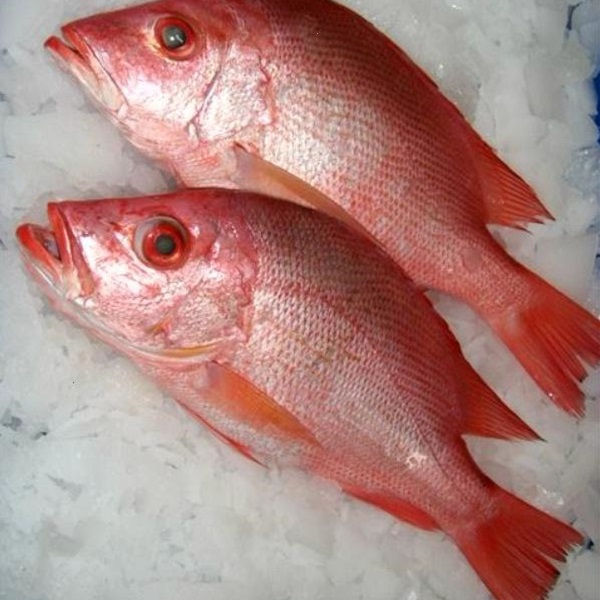 15 Proven Health Benefits of Red Snapper Fish (Protein Source)