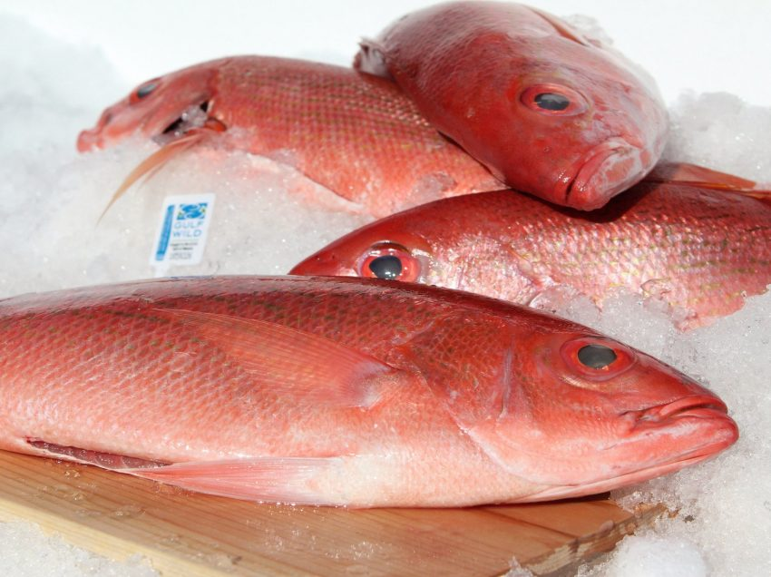 25 Unbelievable Health Benefits of Snapper Fish