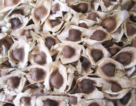 11 Wondrous Health Benefits of Drumstick Seeds