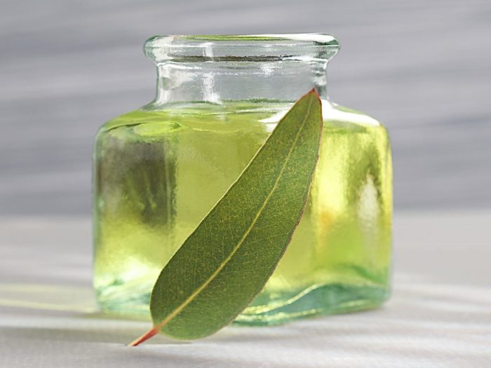 20 Proven Benefits of Eucalyptus for Lungs Health