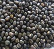15 Health Benefits of Black Gram Dal – Indian Urad Dal
