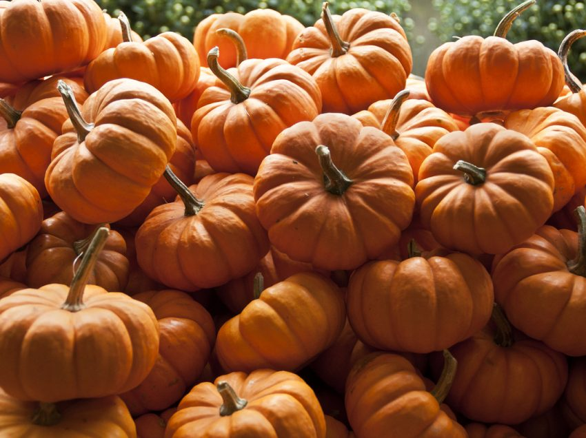 22 Benefits of Pumpkin for Skin and Hair – Natural Treatment