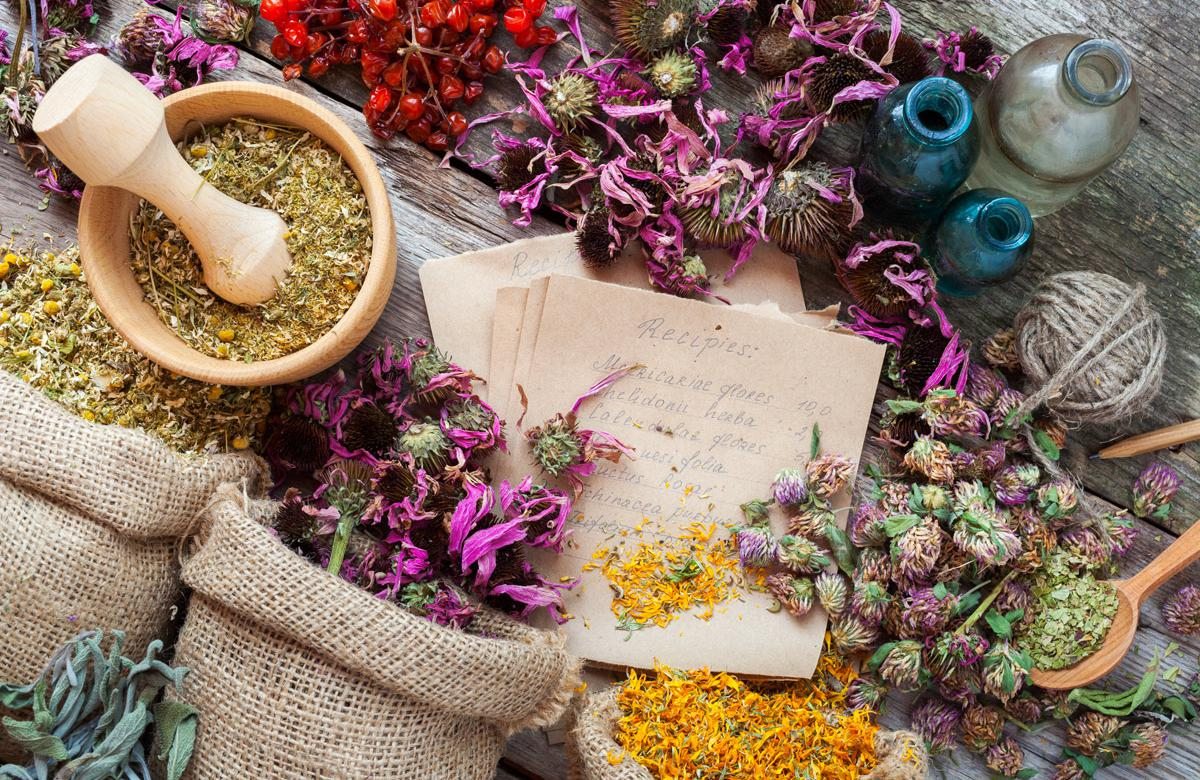 15 List of Bitter Herbs and Health Benefits You Must Know