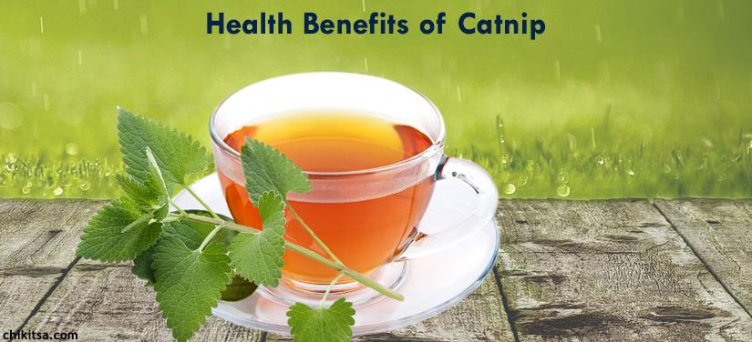 14 Top Health Benefits of Catnip Tea You Would Never Imagine
