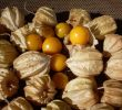 16 Science-Based Health Benefits of Ground Cherry