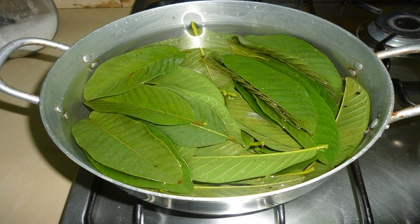12 Natural Health Benefits of Guava Leaves for Diabetes Treatments
