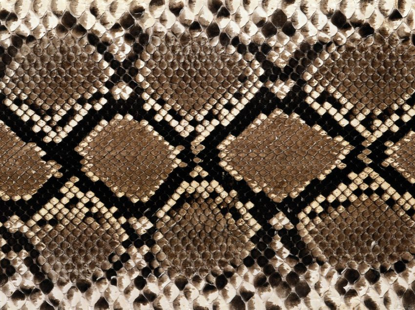 12 Surprising Health Benefits of Snake Skin You Should Know