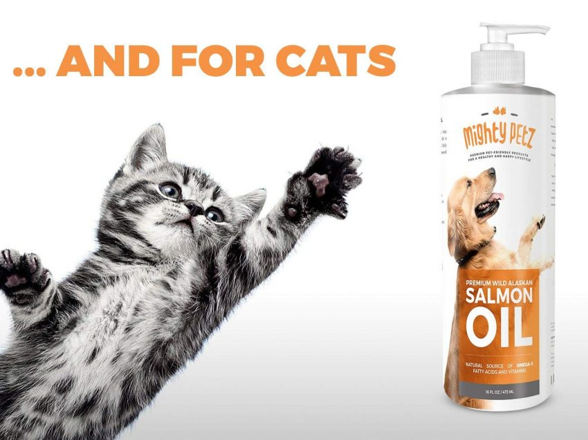 Here are the Unexpected Health Benefits of Fish Oil for Cats You Might Not Know