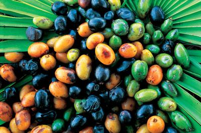 The Great Health Benefits of Saw Palmetto Berry Powder for Men's Health