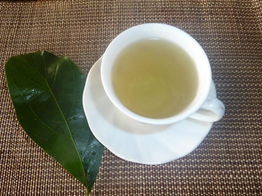 Health Benefits of Drinking Boiled Avocado Leaves – Best Herbal Medicine