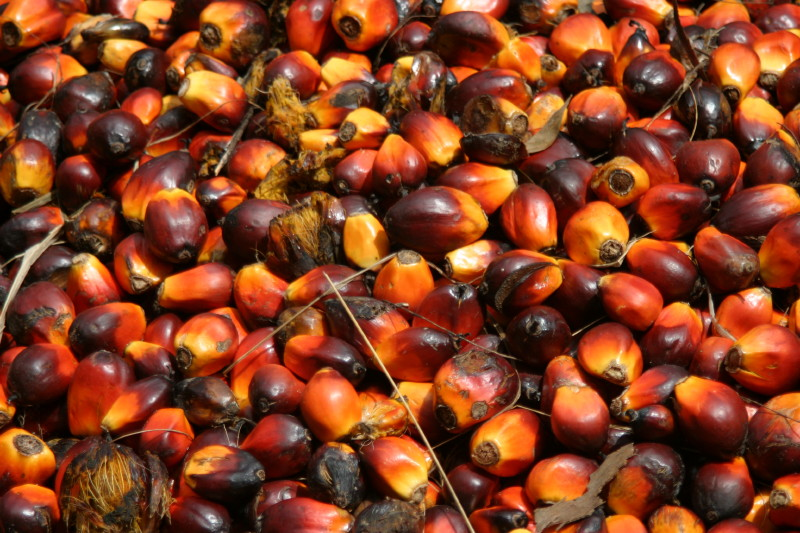 Secret Health Benefits of Palm Kernel Seeds Revealed – Good for Heart!