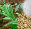 The Surprising Truth about Health Benefits of Guar Gum