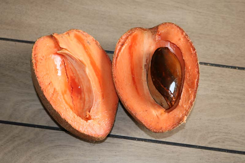 Excellent Health Benefits of Mamey Sapote for Your Whole Body