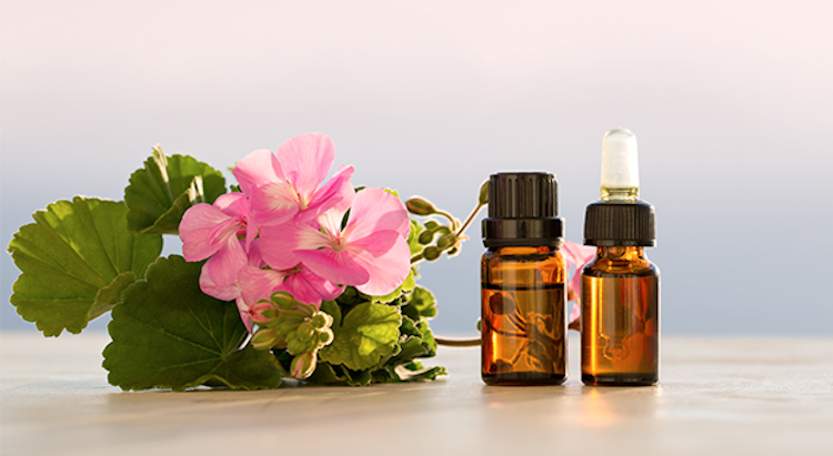 Find Out the Health Benefits of Geranium Oil Here!