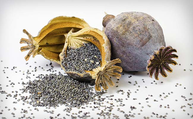 10 Incredible Health Benefits of Poppy Seeds for Your Body and Brain