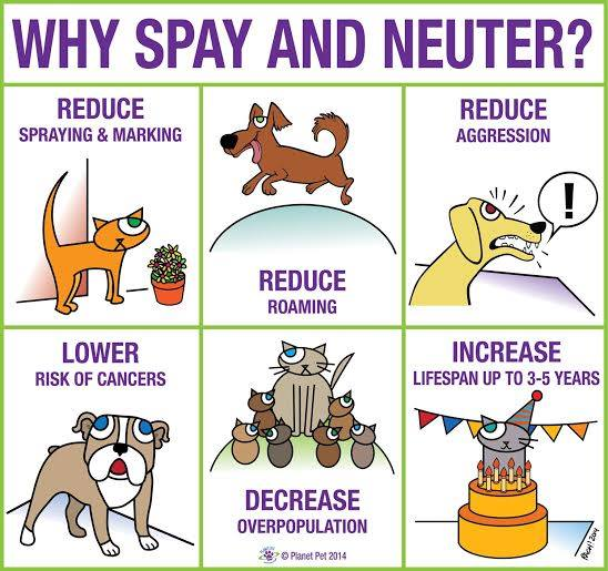 Health Benefits of Having Your Pet Spayed or Neutered – The Recommendation