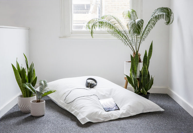 Fabulous Benefits of Snake Plant in Bedroom for Health and Soul