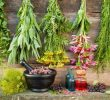 Lists of Herbs Beginning with the letter D and Health Benefits