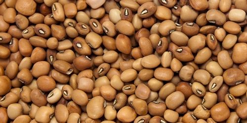 nigerian brown beans