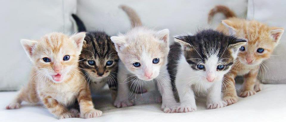 having cats