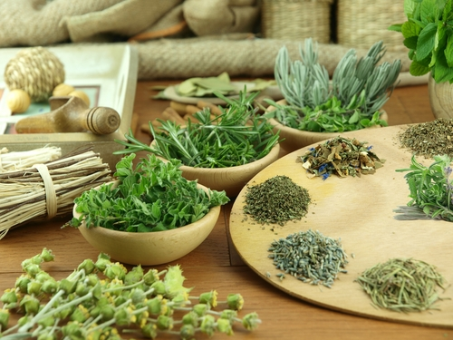 List of Herbs that Starts with L and Health Benefits