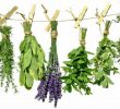Wonderful Aromatic Herbs List and Health Benefits
