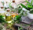 Miracle List of Herbs for Hair Growth Benefits