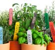 List of Herbs and Spices to Grow – Tasty, Healthy and Easy