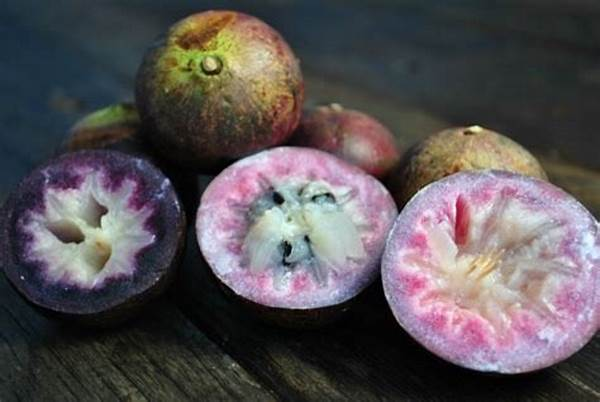 15 Excellent Health Benefits of Jamaican Star Apple For Immune System