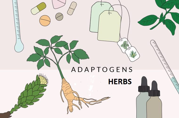 Complete List of Adaptogenic Herbs – Potent and Natural Stress Relieve