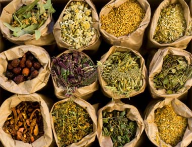 List of Medicinal Herbs Found in Nepal and Health Benefits
