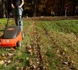 Benefits of Mulching Leaves into My Grass – Saving Time, Energy and Money
