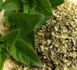Benefits of Oregano Leaves for Cough (Scientifically Proven)