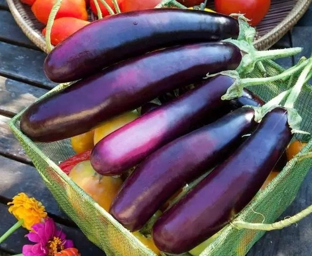 Top Benefits of Eggplant for Kidneys Health You've Never Known Before