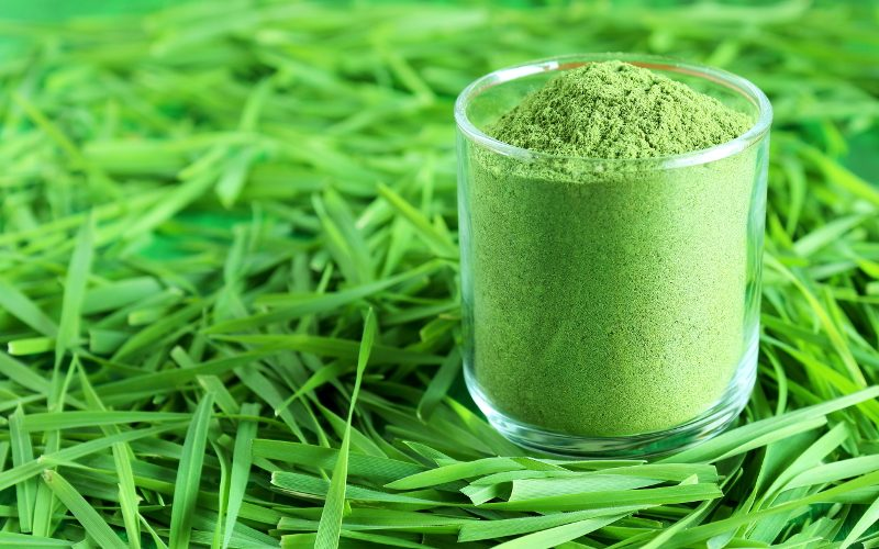 Excellent Benefits of Wheatgrass Powder for Diabetes as Food Supplement