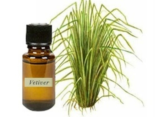Vetiver Essential Oil for Emotional Health Benefits (Anxiety and Brain Health)