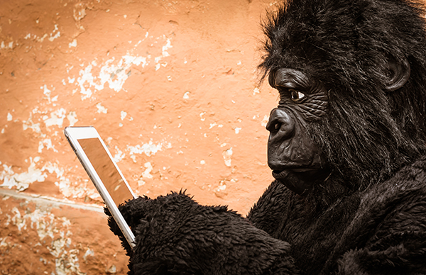Gorilla with digital Tablet