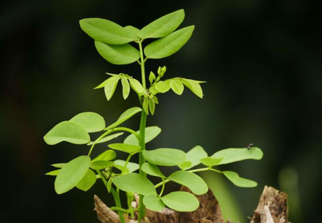 growth saas---