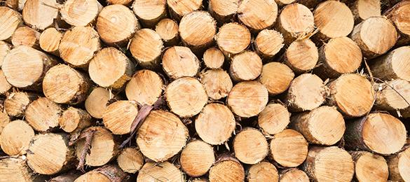 FSC-zertifiziertes Holz