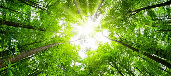 Klimaschutz bei Quelle