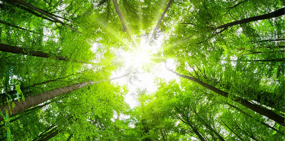 Weitere Klimaschutzmaßnahmen bei Universal